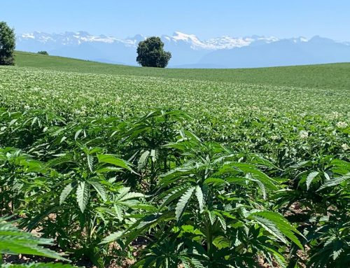 Hemp Industry Response to the Cannabis Administration and Opportunity Act