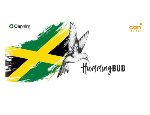 Jamaican Cannabis Launching for German Medical Cannabis Patients